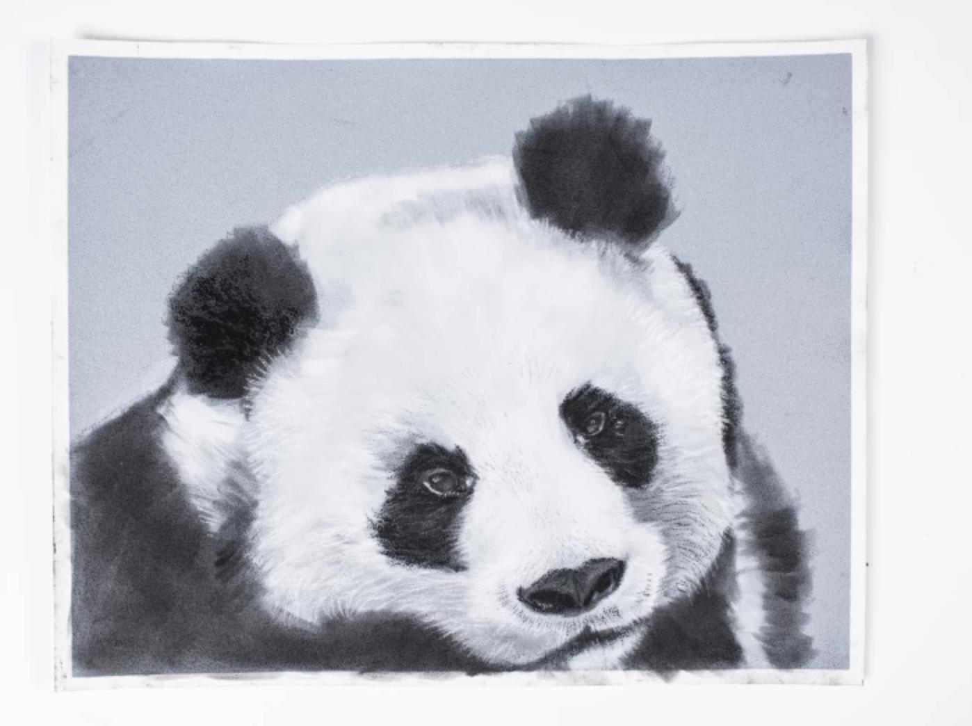 charcoal panda drawing
