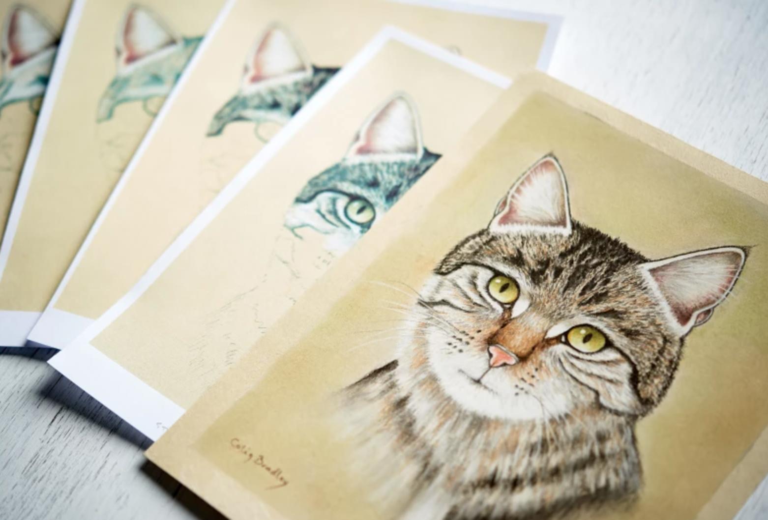 pastel cat drawing