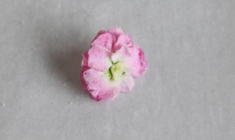 sugar-coated flowers