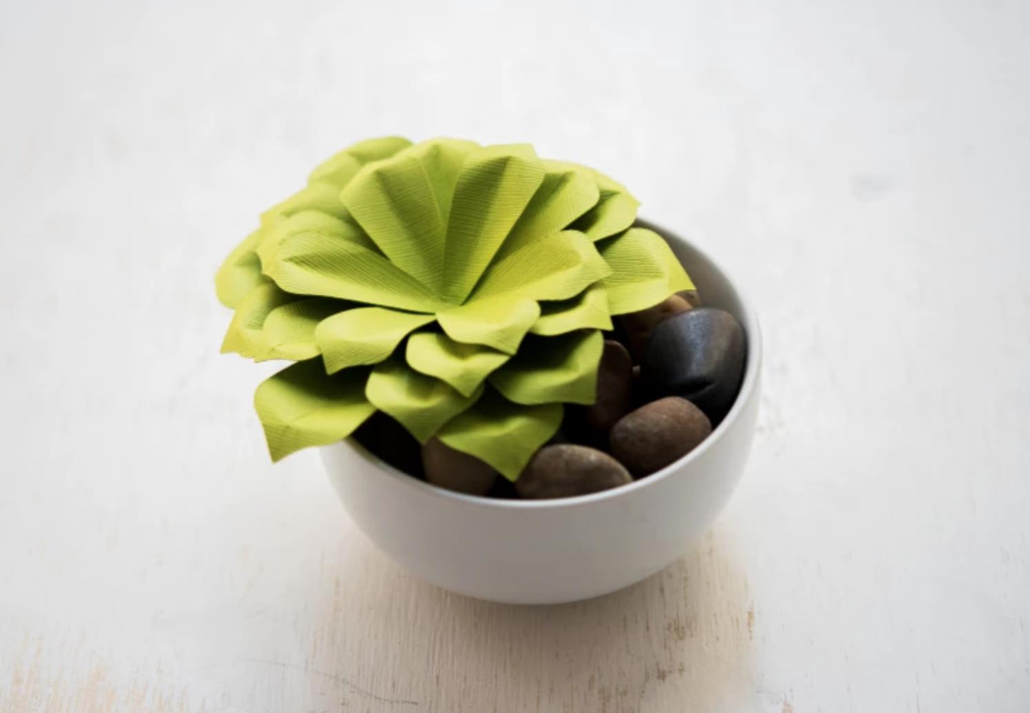 paper succulent plant