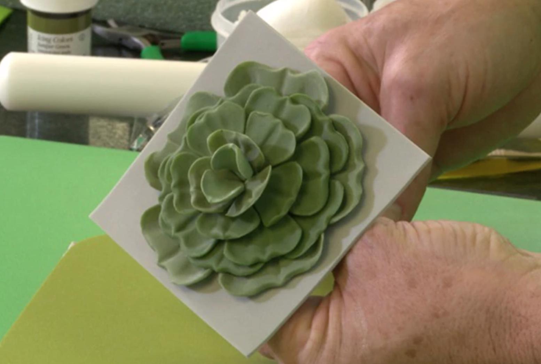 fondant succulent