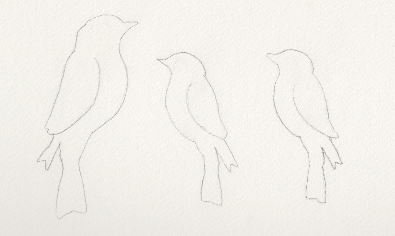 bird template tracings