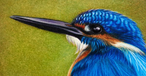 Colored pencil drawing of a bird