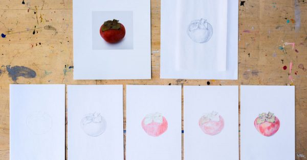 Various sketches of a tomato