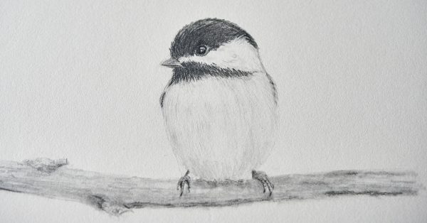 Black and white drawing of a bird