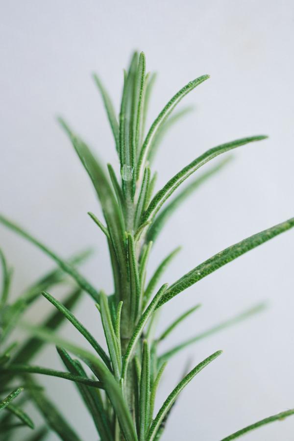 Sprig of Fresh Rosemary