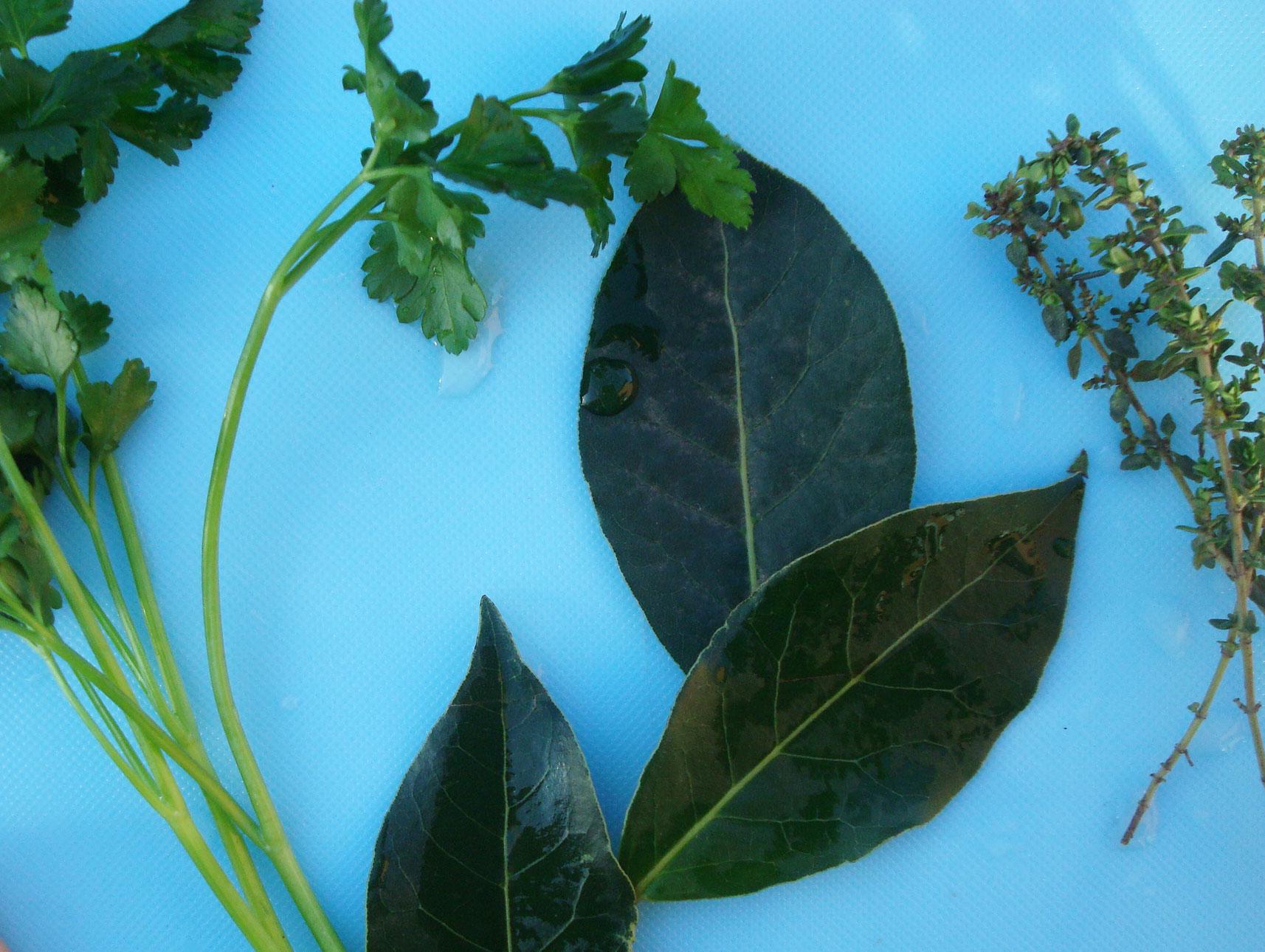 Herbs for Bouquet Garni Seasoning