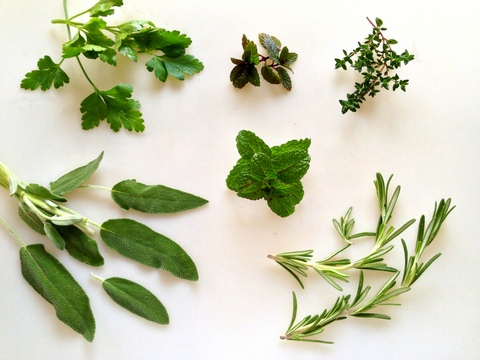 Herbs for Gardens - Mint, Parsley, Sage, Thyme and Rosemary