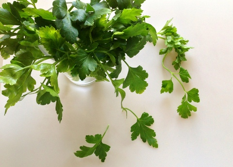 Fresh Italian Parsley in a Glass of Water