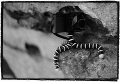 Gorillapod - Camera Stabilizer