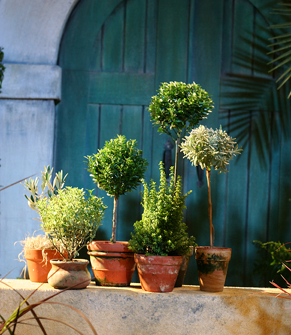 Topiary Herbs in Pretty Posts - Herb Gardening on Craftsy.com