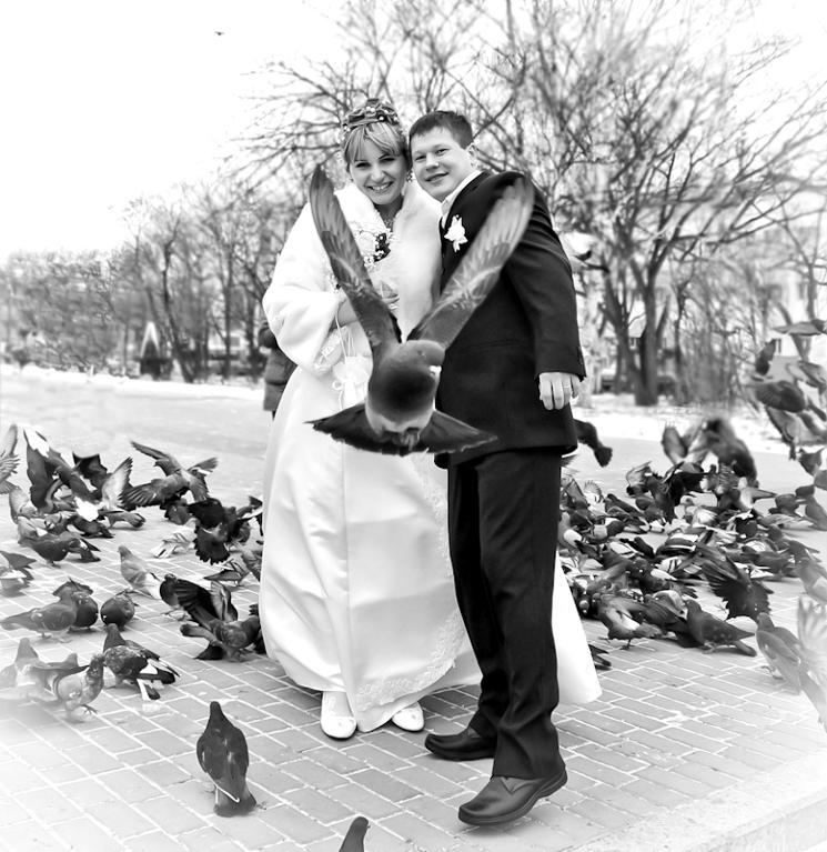 Bride, Groom and Perfectly Placed Pigeon