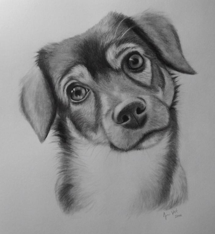 Drawing of Dog: Bluprint