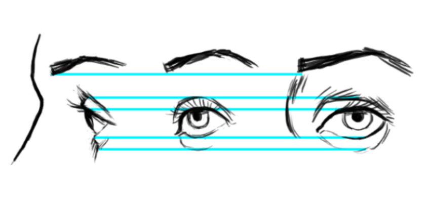 Drawing the Eye: Proportions Illustration