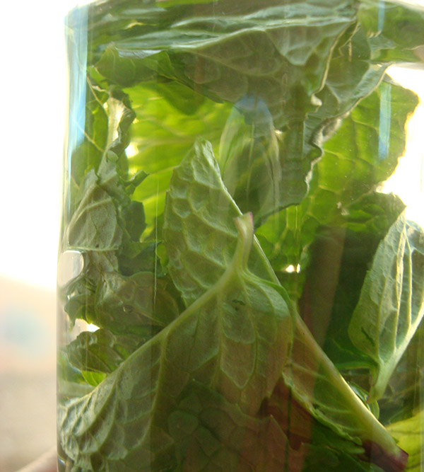 Steeping Homemade Mint Extract