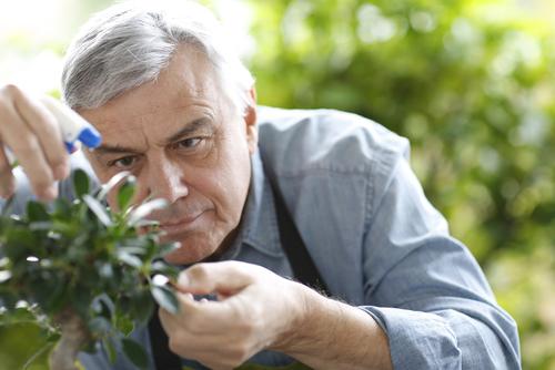 Man Watering a Bonsai Tree