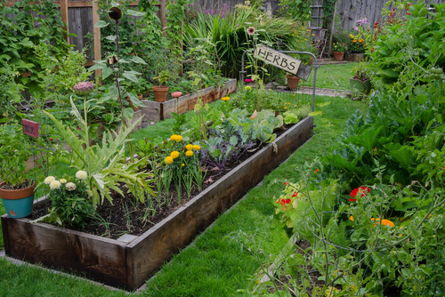 Garden Layout - Raised Beds