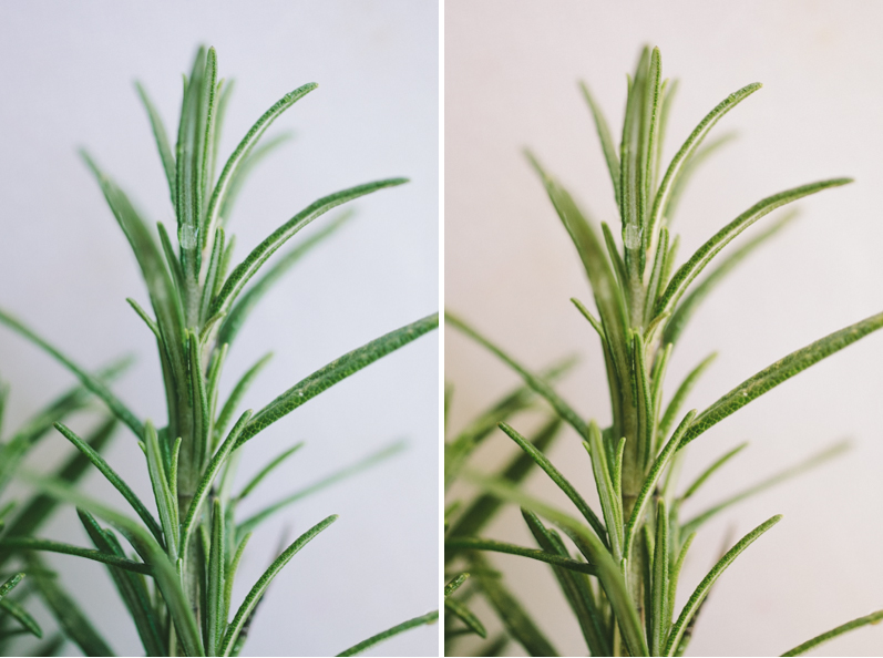 Custom White Balance in Photography: Two Plants