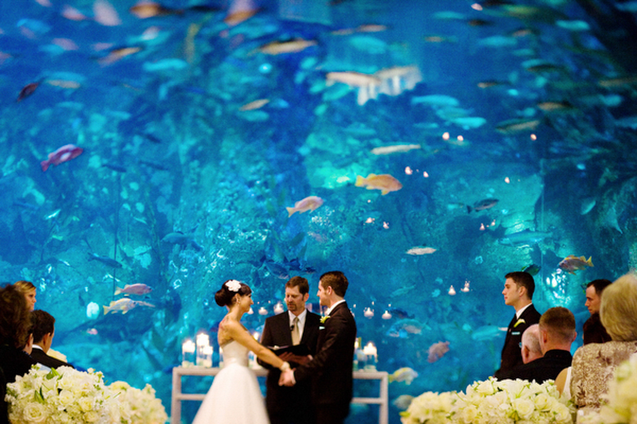 Using Negative Space at an Aquarium Wedding