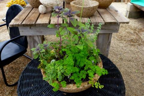 Mixed herb container shows how well herbs grow in planters