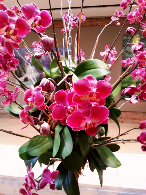 Orchid topiary