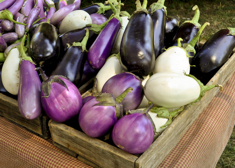 Mixed eggplants grow well in containers.
