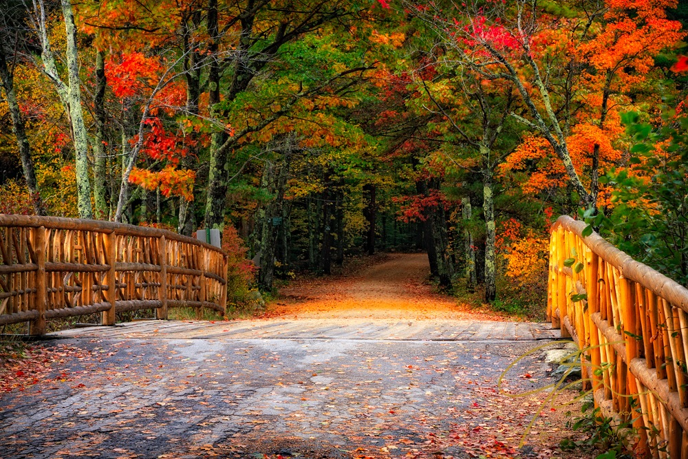 Winding forest road in autumn