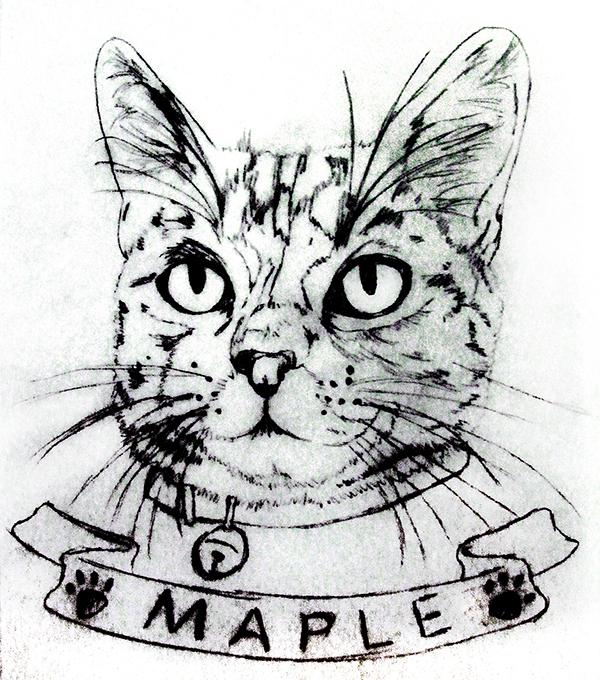 Pencil sketch of tabby cat with 'maple' written below