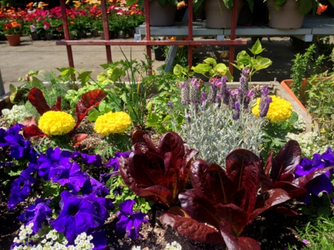This edible garden plan includes flowers and foods.