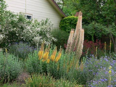 Certified backyard habitat with drought-tolerant plants in Idaho