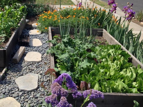 Flowers are mixed in this edible garden plan.