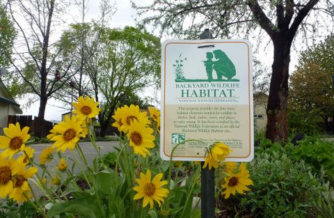 Certified Backyard Habitat sign in garden with arrowleaf balsamroot flowers