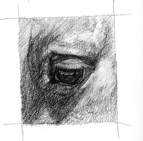 Upclose sketch of a horse's eye