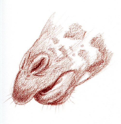 Drawing of a giraffe's mouth