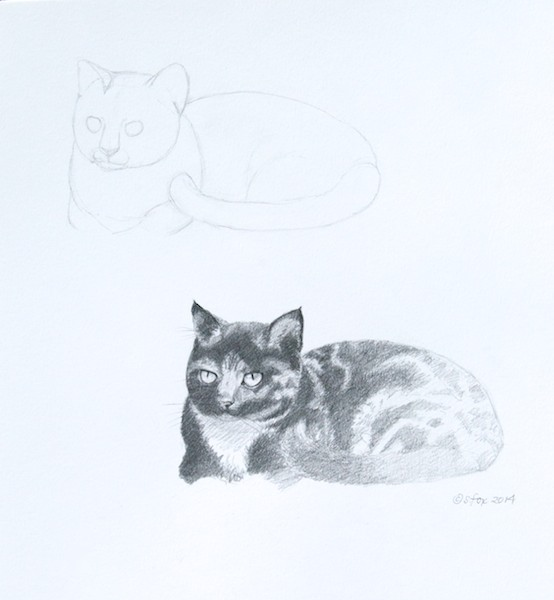 Drawing of a tabby cat, including initial sketch