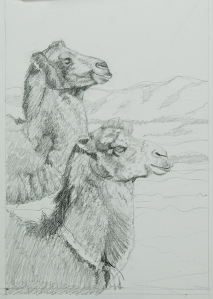 Sketch of Two Mongolian Camels