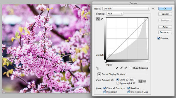 Original unedited image of flowers in Photoshop