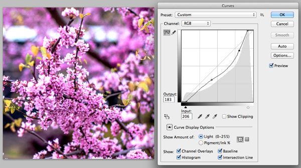 After adjusting curves of the flower image in Photoshop