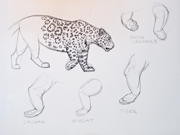 Reference sketch of a jaguar