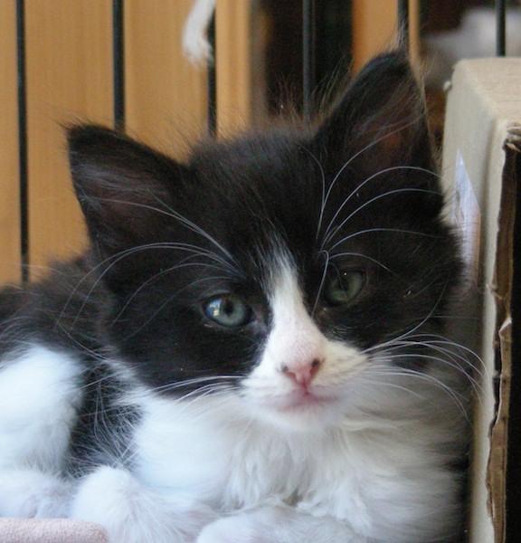 Photo of a kitten