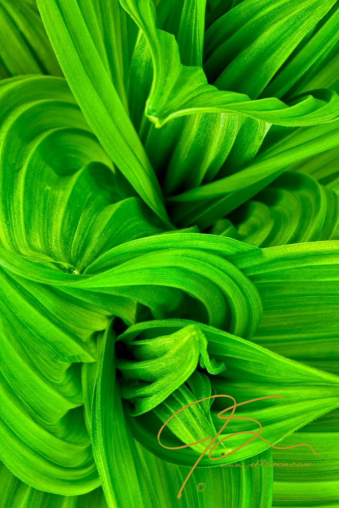 Abstract image of a springtime plant - Craftsy.com