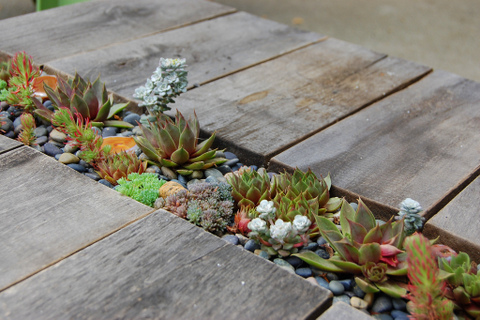 Succulent table by FarOutFlora on Flickr Creative Commons