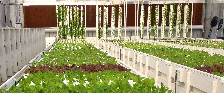 plants growing in horizontal and vertical beds