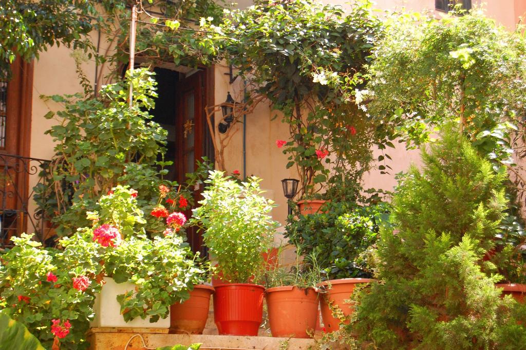 garden crete