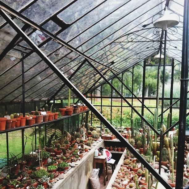 Cactus Greenhouse in Buenos Aires