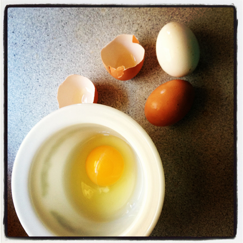 egg yolk in a bowl and broken egg shells