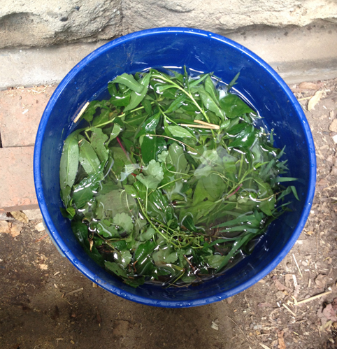 various weeds in a bucket with water