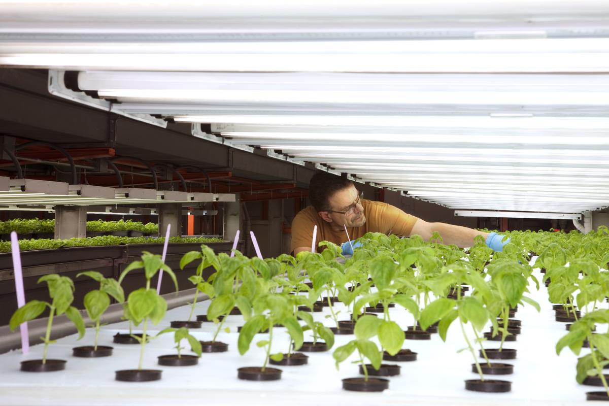 plants growing under grow light