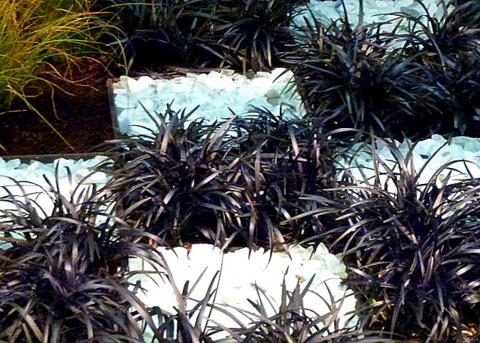 Black mondo grass with white rocks