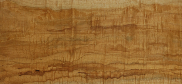 bigleaf maple heartwood